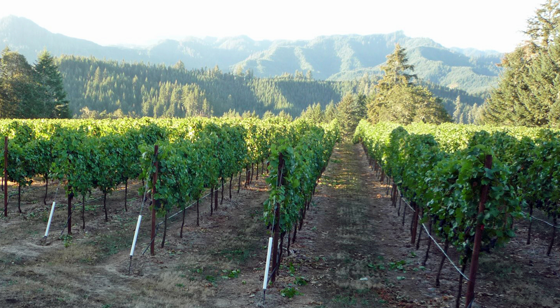 Brandborg Vineyard and Winery