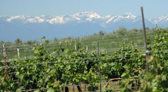 Copper Belt Winery