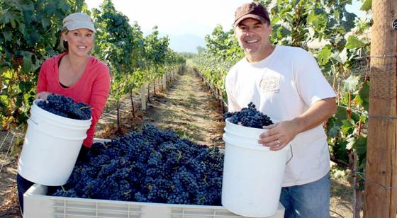 Jaxon Vineyards
