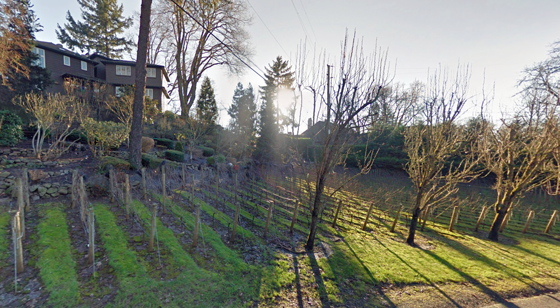 Monte Ferro Winery