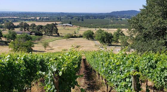 Natalie's Estate Winery