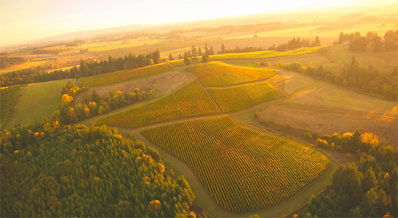 North Valley Vineyards