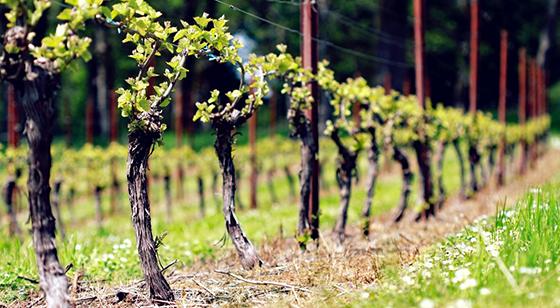 Seufert Winery