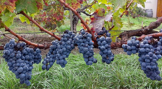 Spangler Vineyards