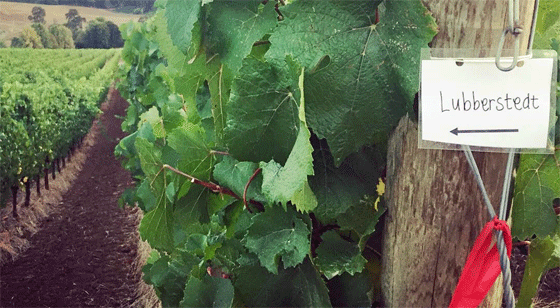 Stedt Wines