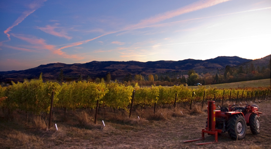 Upper Five Vineyards & Wines