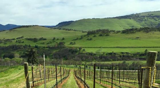 Irvine Amp Roberts Vineyards 2012 Oregon Pinot Noir Cellar