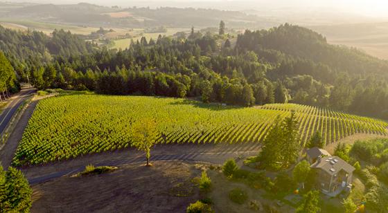 Roots Wine Company 2013 Melon de Bourgogne | Cellar 503, an Oregon ...